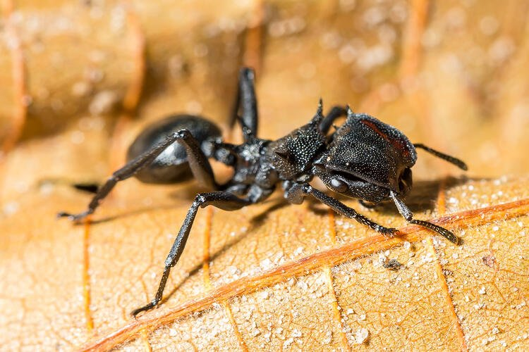 The Five Most Dangerous Stinging Insects and How to Avoid Them